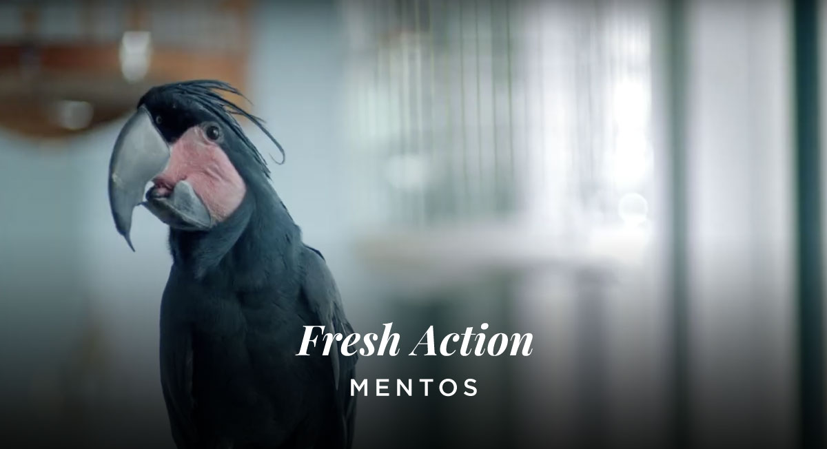 David Rechtmann – Mentos – Fresh Action